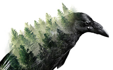 Forest Crow