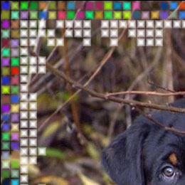 ÂCheck-box Random Colors for the Outer Frame is enabled