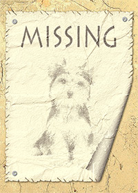 Result: Lost Dog Notice