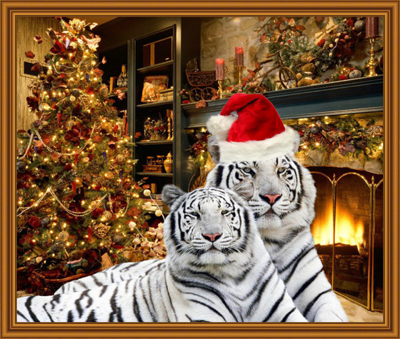 New Year Tigers In A Frame