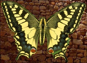 Insert the butterfly into the stone wall texture