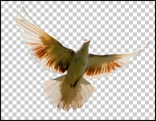 Bird on Transparent Background