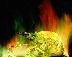 Chameleon in the fire