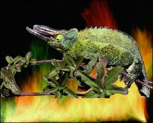 paste the chameleon into the photo with the fire