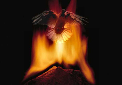 Photo collage: the dove in the fire