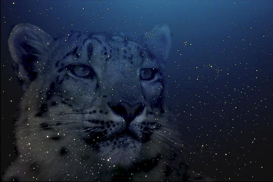 Here we are — the snow leopard turned into a starry one and our wallpaper is