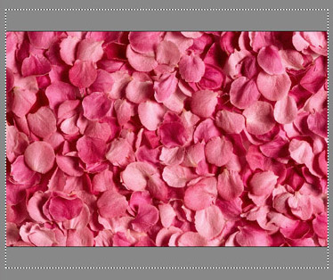 We change the size of the rose petals image