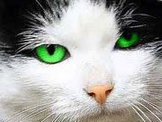 a bright green color for the cats eyes