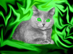 Cat against a green background