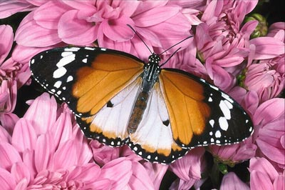 Color photo of a butterfly on a flower