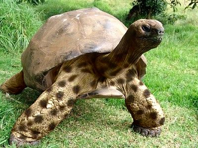 Result: tortoise picture