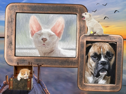 Pets Photos in Pastel