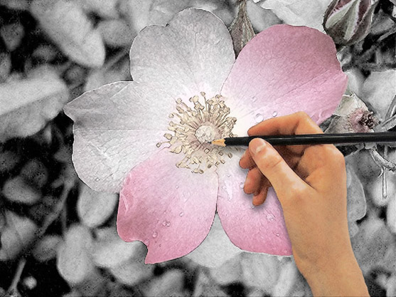 a hand drawing a flower