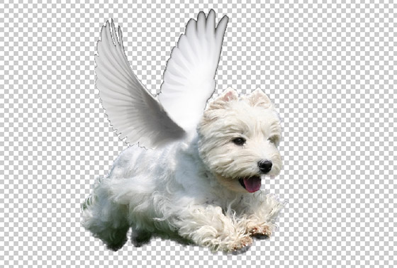 Winged Dog