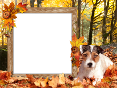 Frames: Autumn Pack