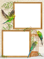 Frames: Birds Pack